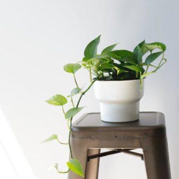Les plantes dépolluantes au service de votre bien-être…