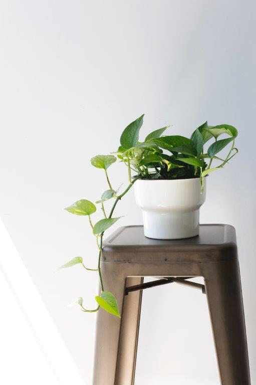 Les plantes dépolluantes alliées de votre bien-être